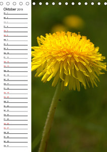 Der Löwenzahn / Geburtstagskalender (Tischkalender 2019 DIN A5 h