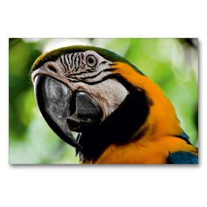 Premium Textil-Leinwand 90 cm x 60 cm quer Papagei