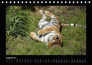 Bitte nicht stören... hier träumen TiereAT-Version (Tischkalend