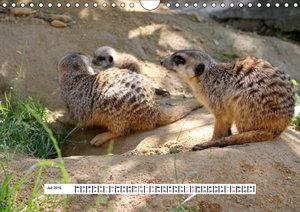 Erdmännchen - Die Kobolde im Tierreich (Wandkalender 2019 DIN A4