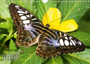 Fragile Beauties - Exotic butterflies (Wall Calendar 2020 DIN A4