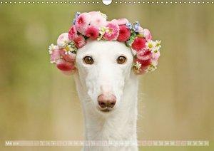 Zauberhafte Windhunde
