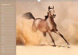 Pferde. Araber im Wüstensand