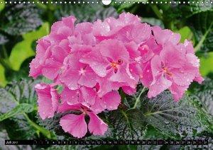 Blütenträume in Rosa und Pink