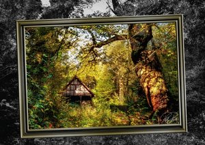 Alles im Rahmen - Sonne im Wald (Posterbuch DIN A4 quer)