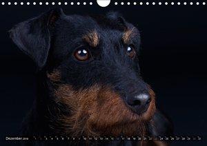 Faszination Terrier