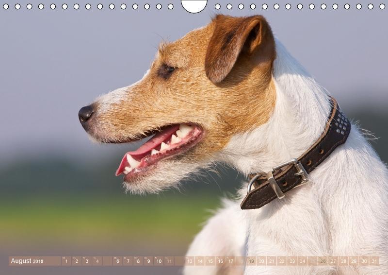 Faszination Terrier - zum Schließen ins Bild klicken