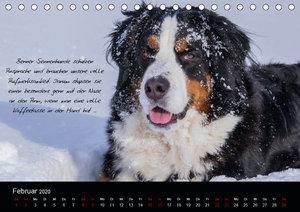So ist er. Der Berner Sennenhund (Tischkalender 2020 DIN A5 quer