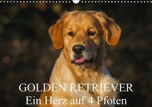Golden Retriever - Ein Herz auf 4 Pfoten