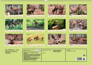 Der Rothirsch - Der König in unseren Wäldern (Wandkalender 2019