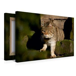 Premium Textil-Leinwand 45 cm x 30 cm quer Wildkatze