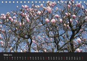 Baum Art (Tischkalender 2019 DIN A5 quer)