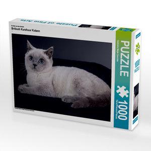 Ein Motiv aus dem Kalender Britisch Kurzhaar Katzen 1000 Teile P