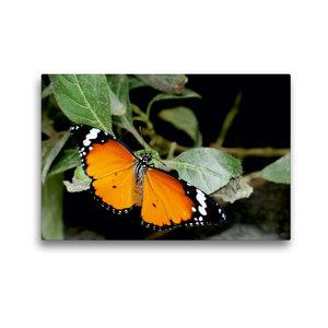 Premium Textil-Leinwand 45 cm x 30 cm quer Monarch