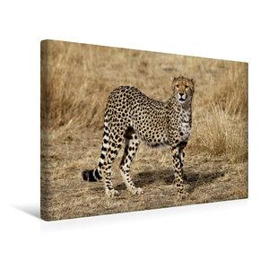 Premium Textil-Leinwand 45 cm x 30 cm quer Gepardin in der Savan