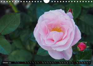 Die Namen der Rosen (Wandkalender 2020 DIN A4 quer)