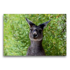 Premium Textil-Leinwand 75 cm x 50 cm quer Wallaby, Western Aust
