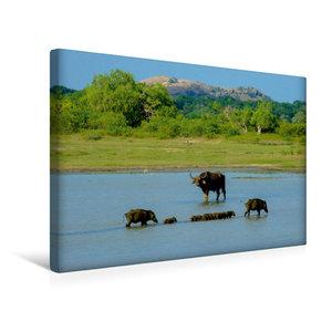 Premium Textil-Leinwand 45 cm x 30 cm quer Im Yala-Nationalpark,