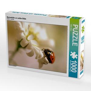 Marienkäfer an weißer Blüte 1000 Teile Puzzle quer