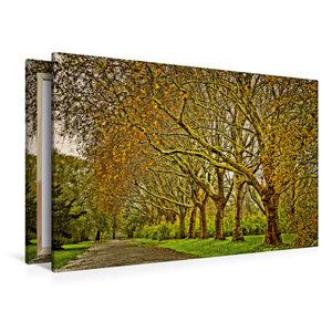 Premium Textil-Leinwand 120 cm x 80 cm quer Goldene Baumallee