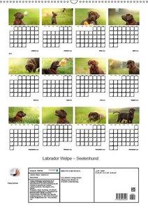 Labrador Welpe - Seelenhund (Wandkalender 2019 DIN A2 hoch)