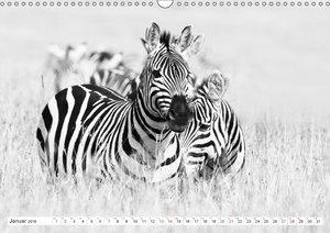 Emotionale Momente: Zebras - black & white.