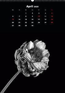 Trockenblumen Schönheiten in schwarz-weiß