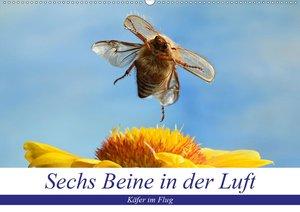 Sechs Beine in der Luft - Käfer im Flug (Wandkalender 2020 DIN A
