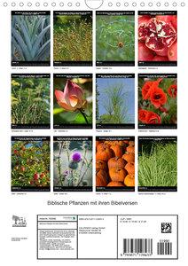 Biblische Pflanzen mit ihren Bibelversen (Wandkalender 2020 DIN