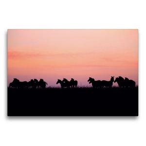 Premium Textil-Leinwand 75 cm x 50 cm quer Zebras in der Masai M