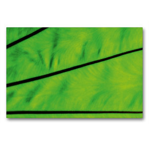 Premium Textil-Leinwand 90 cm x 60 cm quer Strukturen der Natur
