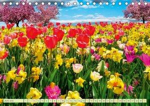 Blumenwiesen ? ein blütenzauberhaftes Jahr