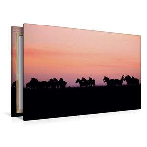 Premium Textil-Leinwand 120 cm x 80 cm quer Zebras in der Masai