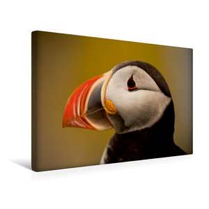 Premium Textil-Leinwand 45 cm x 30 cm quer Papageitaucher (Frate