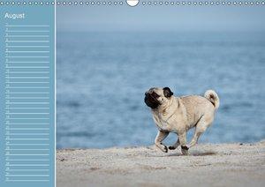 Mopsiger Geburtstagskalender (Wandkalender immerwährend DIN A3 q