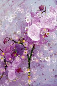 Premium Textil-Leinwand 50 cm x 75 cm hoch Verspielte Romantisch