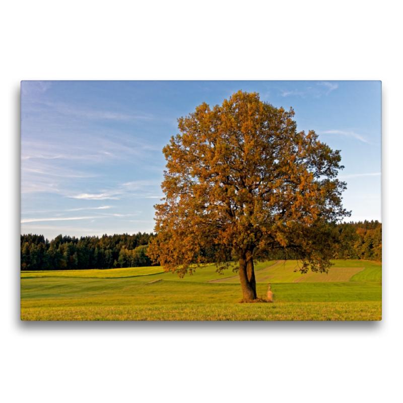 Premium Textil-Leinwand 75 cm x 50 cm quer Herbstwiese nahe Neus - zum Schließen ins Bild klicken