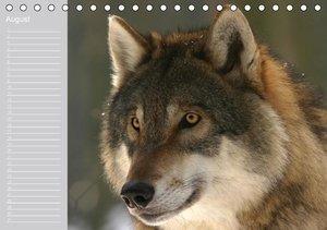 Wölfe (Tischkalender immerwährend DIN A5 quer)