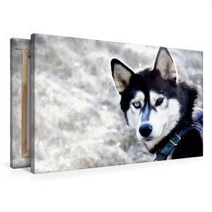 Premium Textil-Leinwand 75 cm x 50 cm quer Sibirische Huskys in