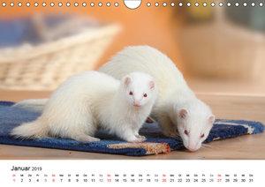 Mit niedlichen Heimtieren durch das Jahr (Wandkalender 2019 DIN