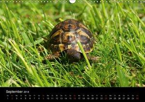 Das Leben der Schildkröten