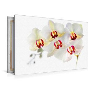 Premium Textil-Leinwand 120 cm x 80 cm quer Phalaenopsis Orchide