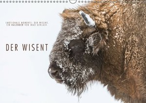 Emotionale Momente: Der Wisent. (Wandkalender 2016 DIN A3 quer)