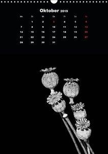 Trockenblumen Schönheiten in schwarz-weiß (Wandkalender 2019 DIN