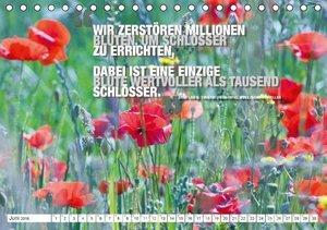 Emotionale Momente: Zitate & Natur (Tischkalender 2016 DIN A5 qu