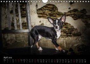Chihuahuas - Cool & Cute / UK-Version (Wall Calendar 2015 DIN A4