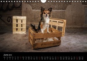 Chihuahuas - Cool & Cute / UK-Version (Wall Calendar 2015 DIN A4