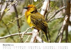 Colourful Birds of Africa (Wall Calendar 2015 DIN A3 Landscape)