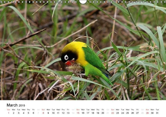Colourful Birds of Africa (Wall Calendar 2015 DIN A3 Landscape) - zum Schließen ins Bild klicken