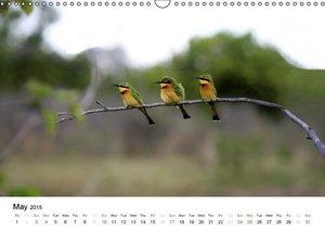 Colourful Birds of Africa (Wall Calendar 2015 DIN A3 Landscape)
